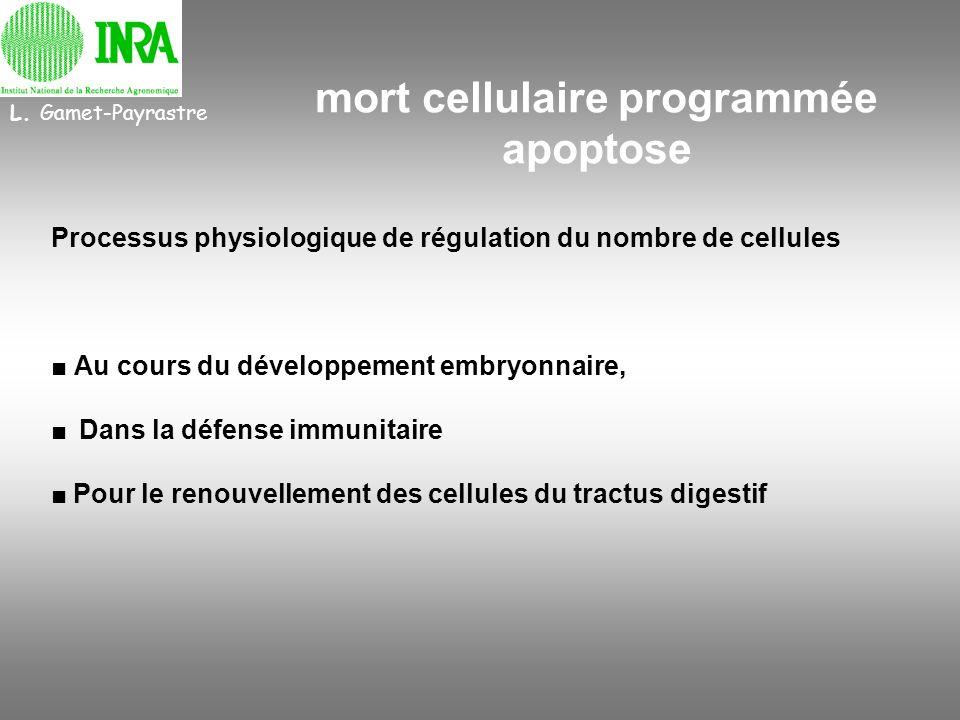 mort cellulaire programmée apoptose Processus physiologique de régulation du nombre de cellules Au cours du développement embryonnaire, Dans la défens