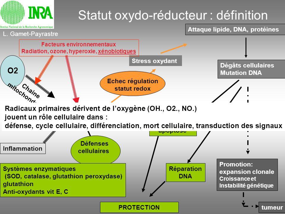 Statut oxydo-réducteur : définition ROS espèces oxygénées réactives Echec régulation statut redox Stress oxydant Attaque lipide, DNA, protéines O2 Cha