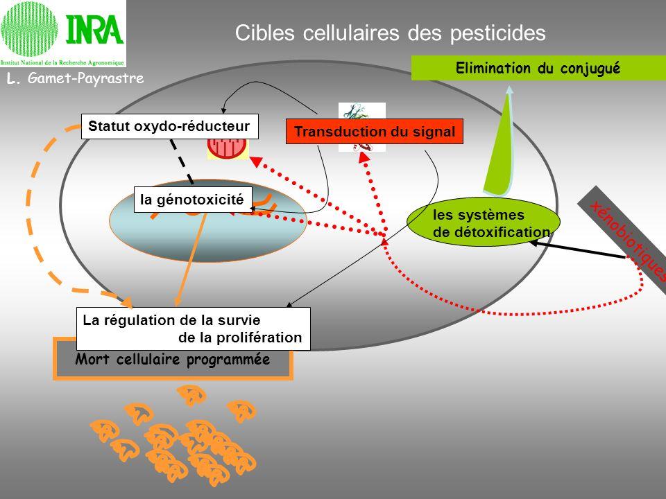 Cibles cellulaires des pesticides Elimination du conjugué les systèmes de détoxification xénobiotiques Mort cellulaire programmée Transduction du sign