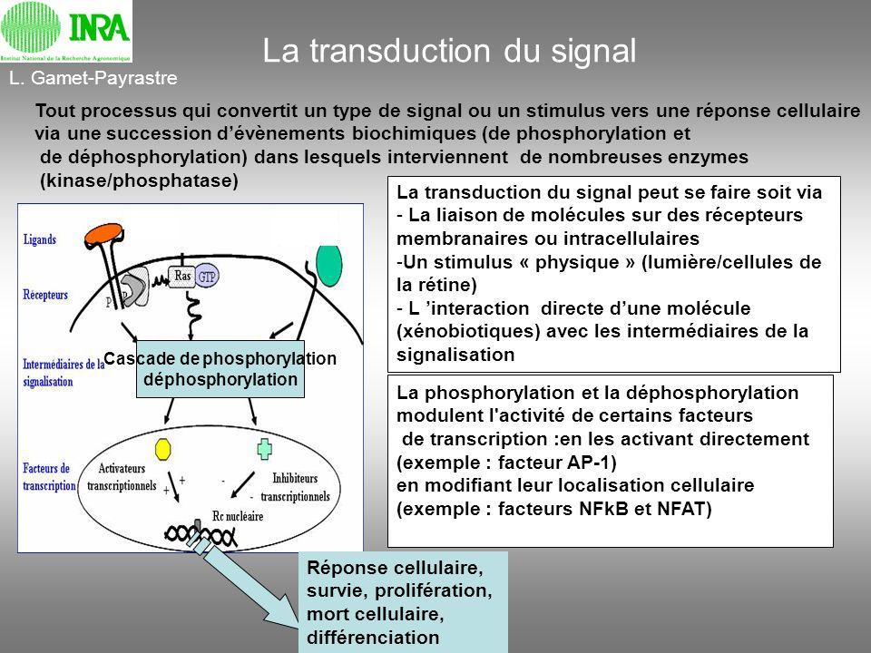 La transduction du signal Tout processus qui convertit un type de signal ou un stimulus vers une réponse cellulaire via une succession dévènements bio