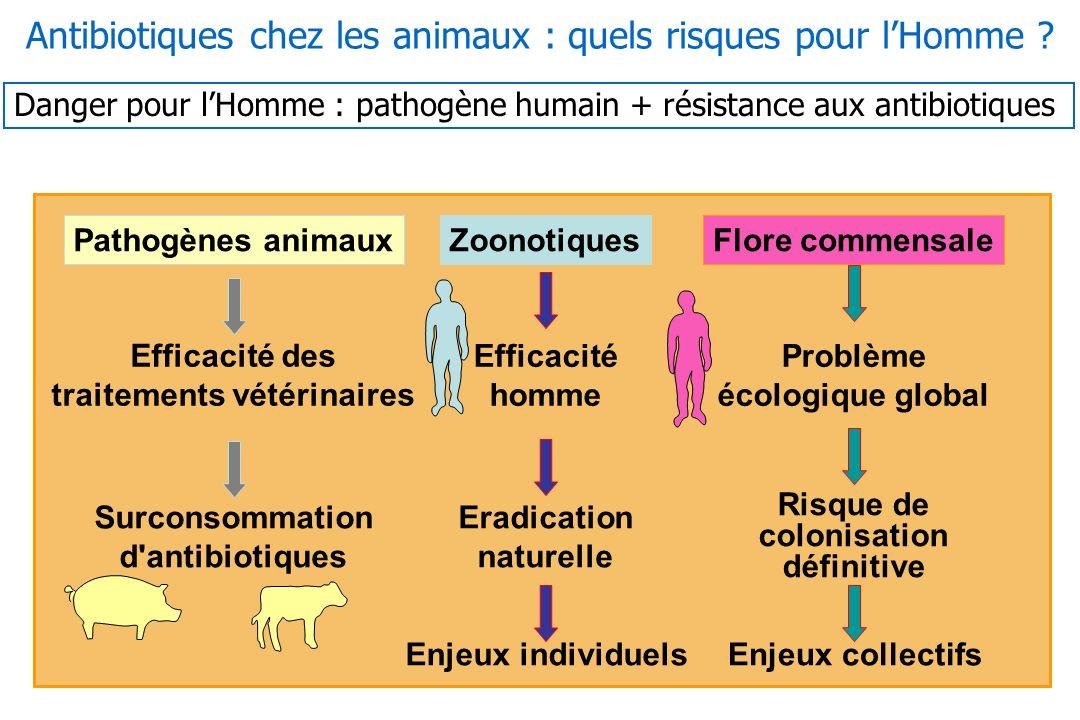 10 Pathogènes animauxZoonotiquesFlore commensale Efficacité des traitements vétérinaires Efficacité homme Problème écologique global Surconsommation d