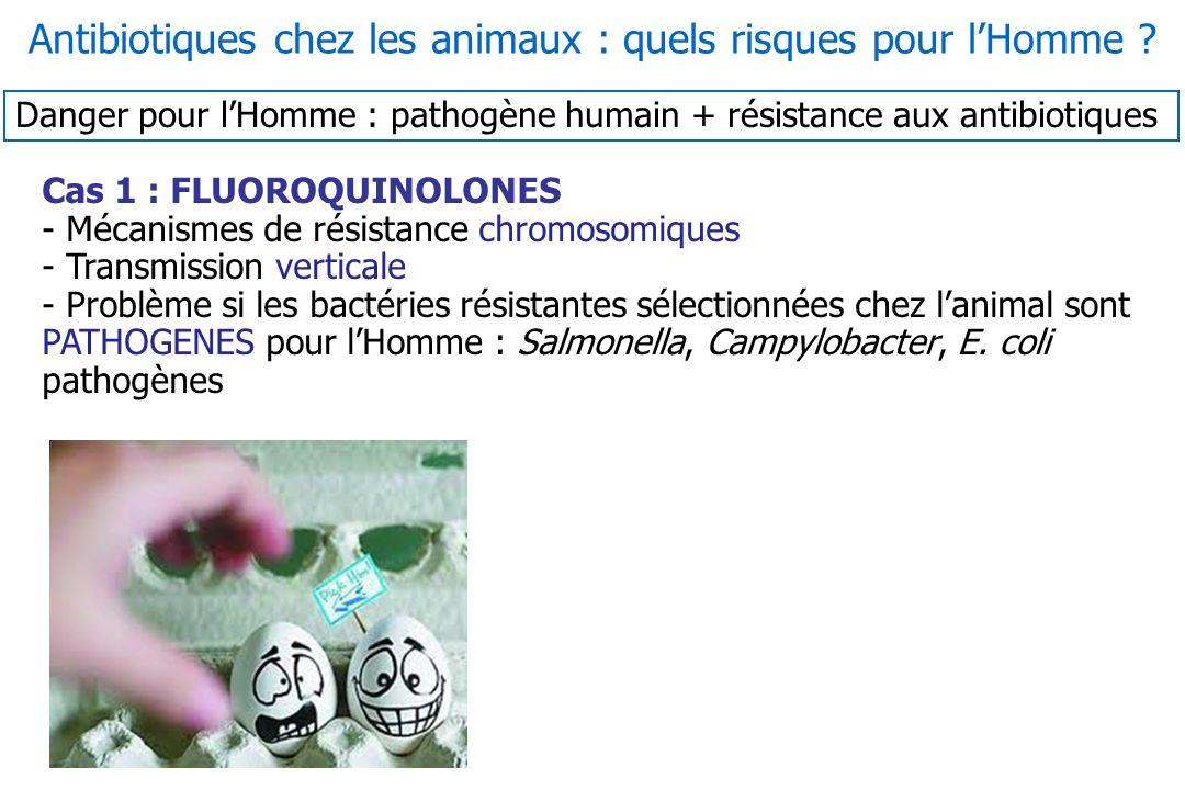 Cas 1 : FLUOROQUINOLONES - Mécanismes de résistance chromosomiques - Transmission verticale - Problème si les bactéries résistantes sélectionnées chez