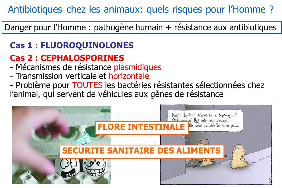 Cas 1 : FLUOROQUINOLONES Cas 2 : CEPHALOSPORINES - Mécanismes de résistance plasmidiques - Transmission verticale et horizontale - Problème pour TOUTE