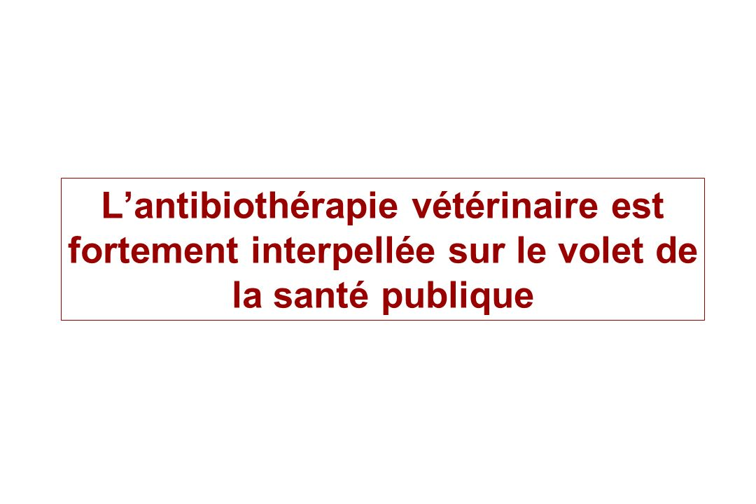 Lantibiothérapie vétérinaire est fortement interpellée sur le volet de la santé publique