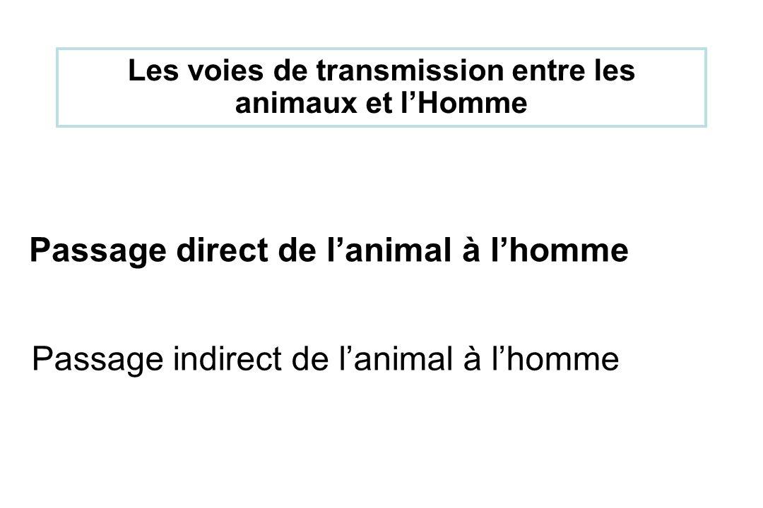 Passage direct de lanimal à lhomme Passage indirect de lanimal à lhomme Les voies de transmission entre les animaux et lHomme