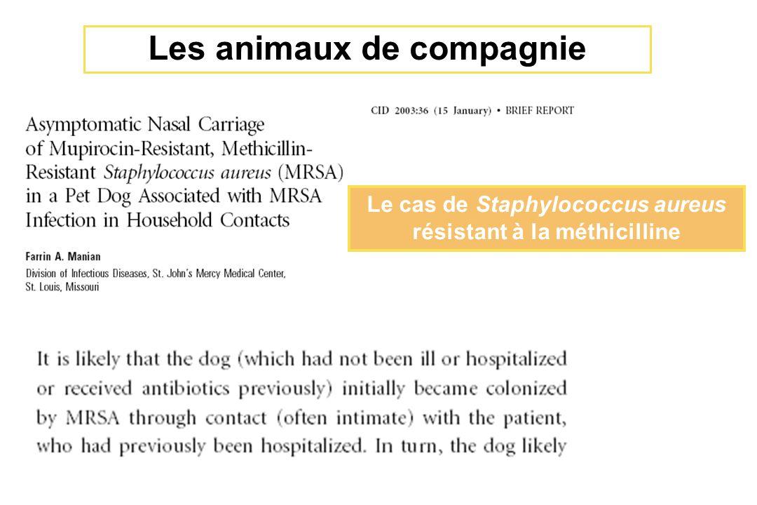 Le cas de Staphylococcus aureus résistant à la méthicilline