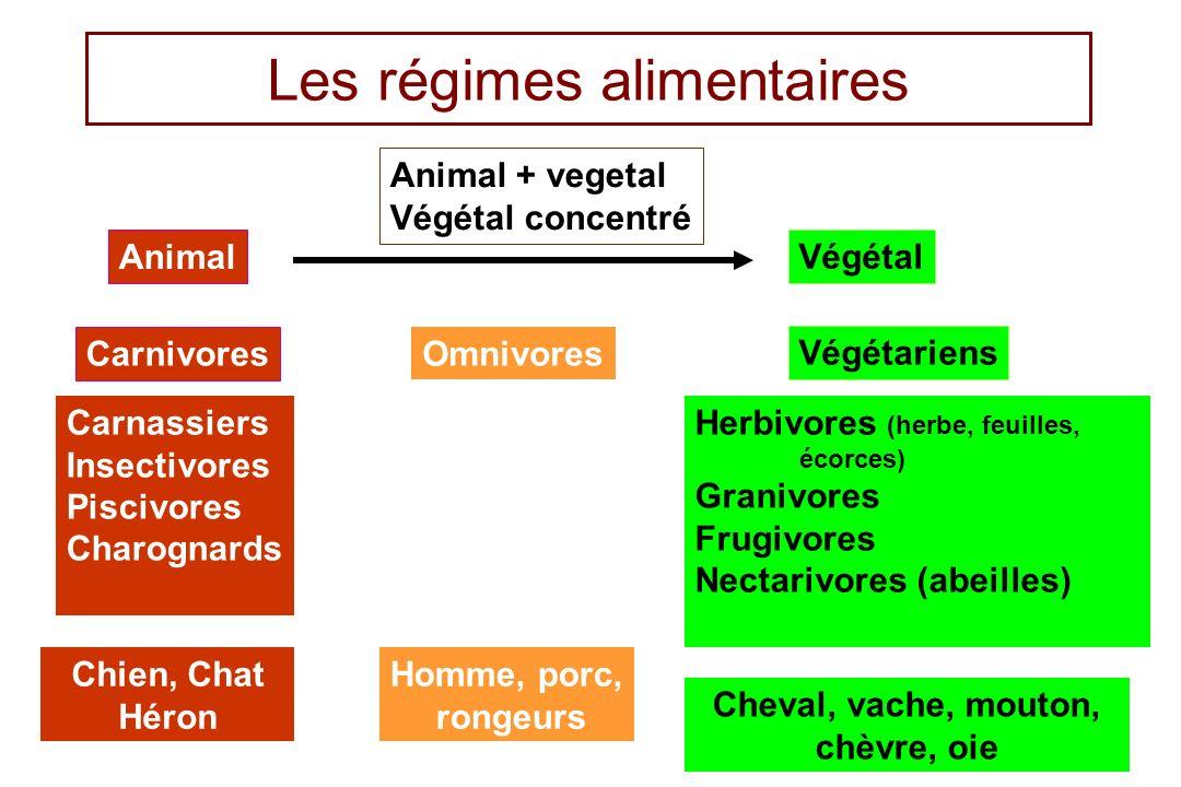 6 Les régimes alimentaires Animal Végétal Carnivores Omnivores Végétariens Carnassiers Insectivores Piscivores Charognards Herbivores (herbe, feuilles