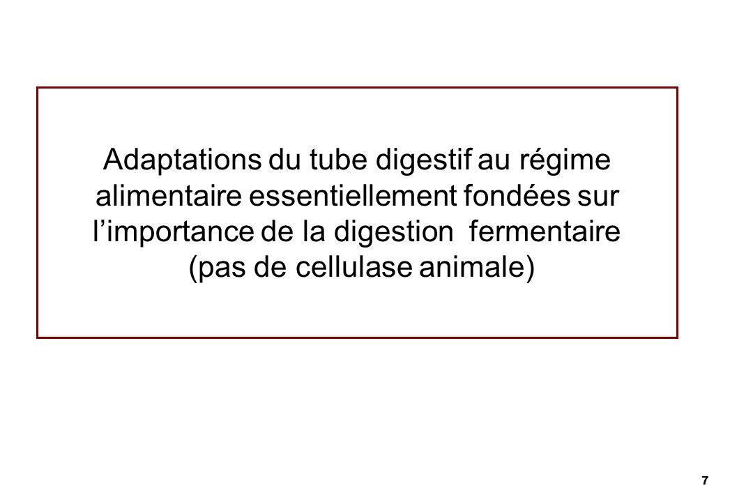 7 Adaptations du tube digestif au régime alimentaire essentiellement fondées sur limportance de la digestion fermentaire (pas de cellulase animale)