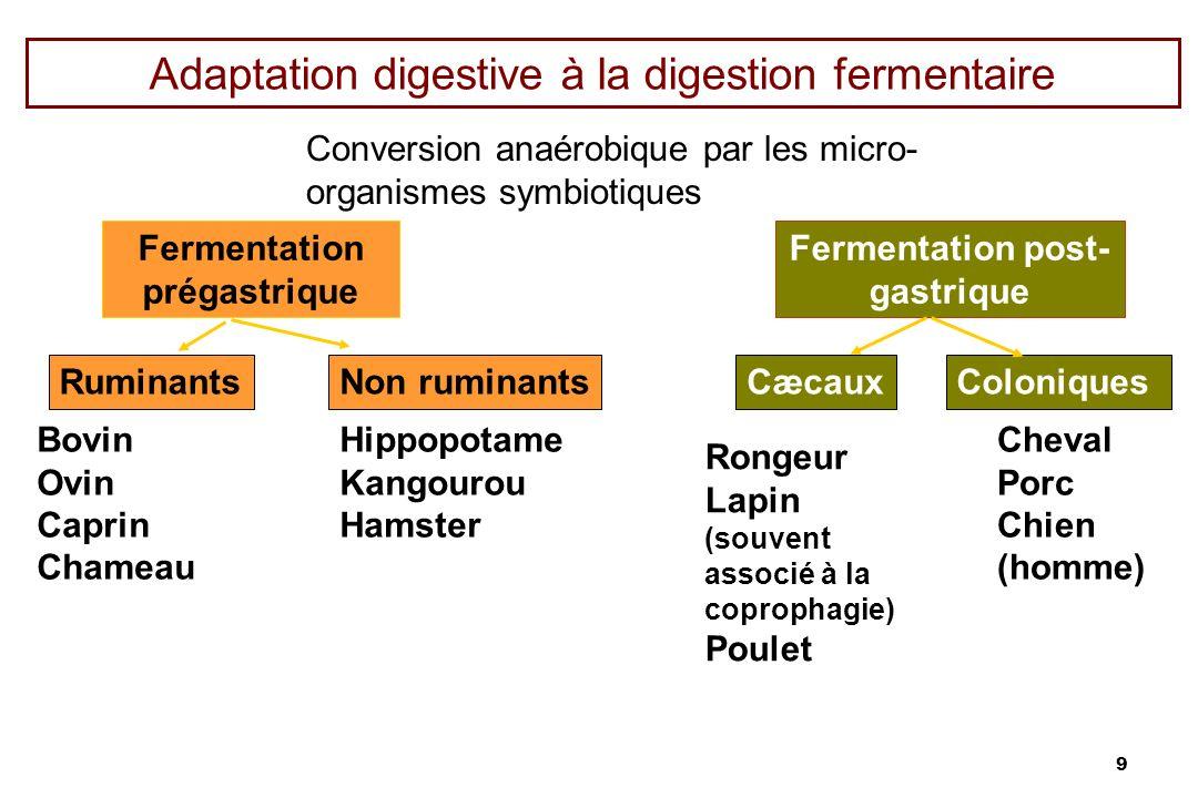 9 Adaptation digestive à la digestion fermentaire Conversion anaérobique par les micro- organismes symbiotiques Fermentation prégastrique Fermentation