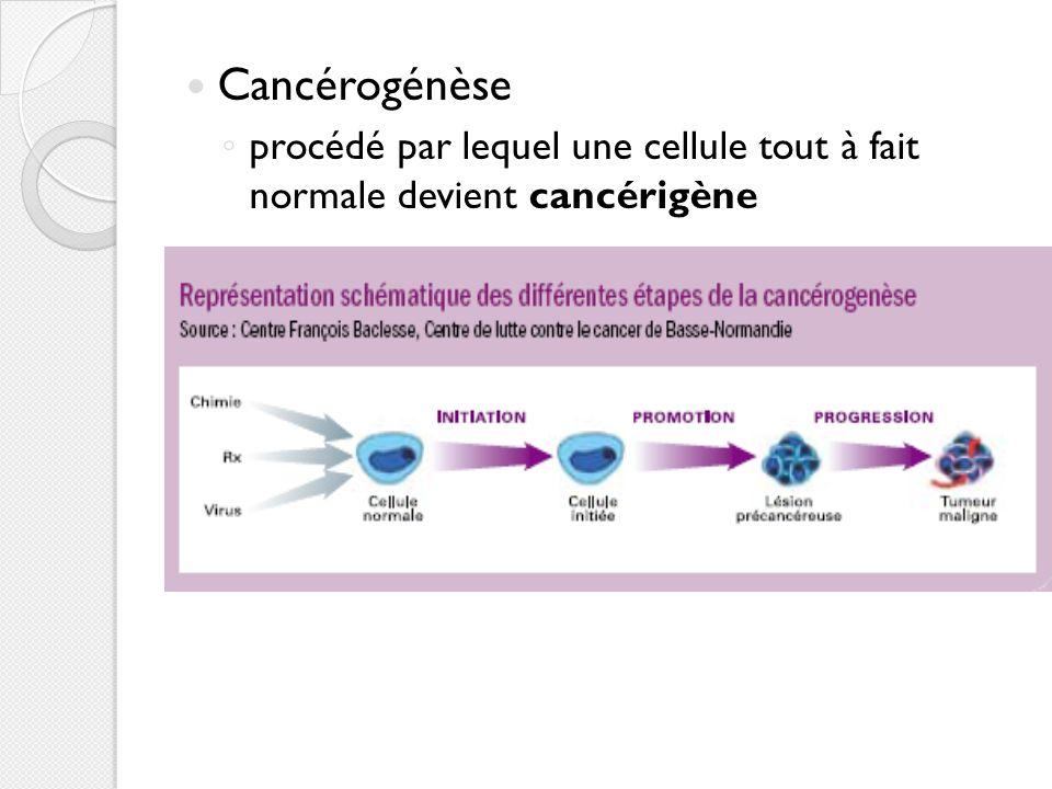 Différents Cancers Les carcinomes : cancer d un épithélium, c est-à-dire une surface composée uniquement de cellules carcinomes épithélium Les sarcomes : cancers proliférant dans des tissus « de support » comme les os.sarcomesos Les cancers hématopoïétiques : cancer des cellules sanguines.cancers hématopoïétiques