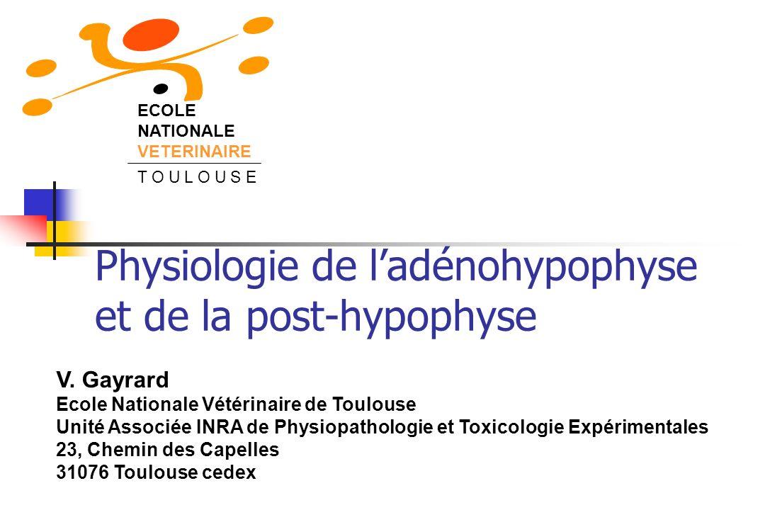 Sécrétions adénohypophysaires Cellules thyréotropes Thyroïde Cellules gonadotropes TSH (thyrotropine) v Thyroxine Métabolisme intermédiaire LH (lutotropine)FSH (follitropine) GONADES Stéroïgogenèse Gamétogenèse