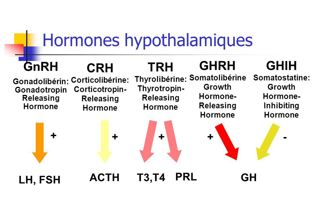 Hormones hypothalamiques GnRH Gonadolibérin: Gonadotropin Releasing Hormone LH, FSH CRH Corticolibérine: Corticotropin- Releasing Hormone ACTH TRH Thy