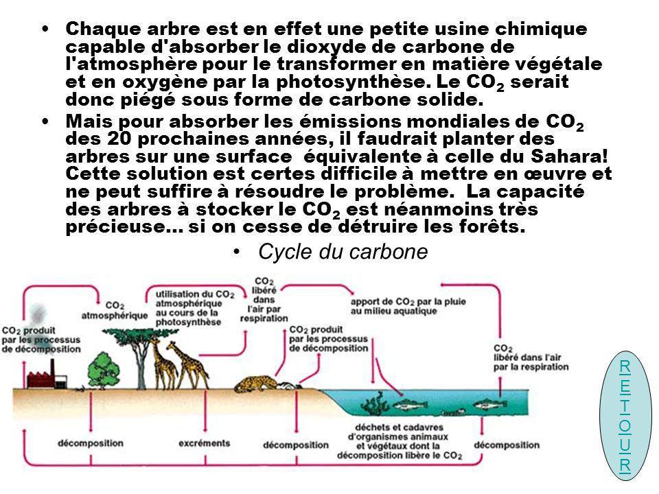 Chaque arbre est en effet une petite usine chimique capable d'absorber le dioxyde de carbone de l'atmosphère pour le transformer en matière végétale e