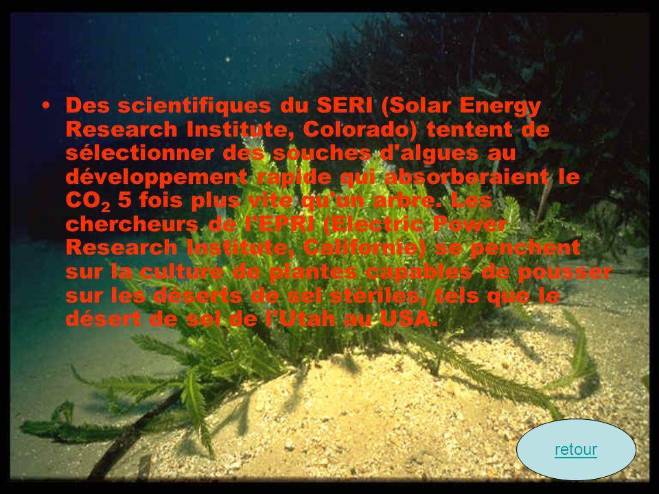 Des scientifiques du SERI (Solar Energy Research Institute, Colorado) tentent de sélectionner des souches d'algues au développement rapide qui absorbe
