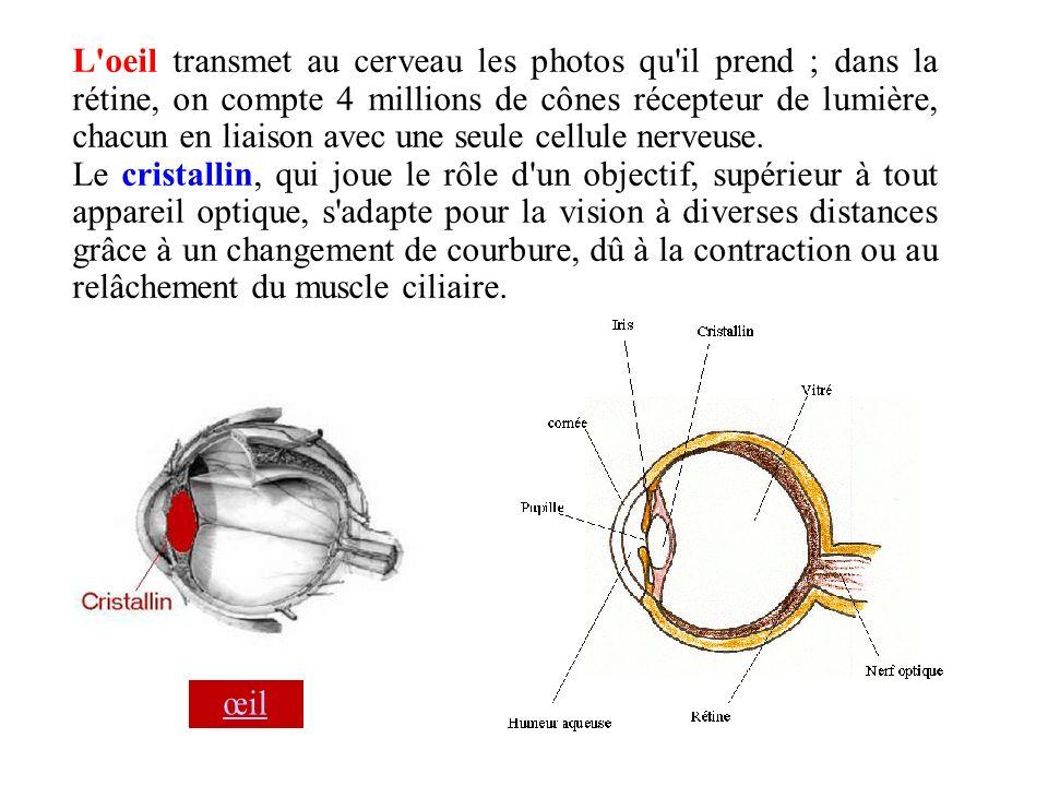 L'oeil transmet au cerveau les photos qu'il prend ; dans la rétine, on compte 4 millions de cônes récepteur de lumière, chacun en liaison avec une seu
