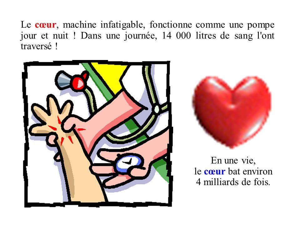 Le cœur, machine infatigable, fonctionne comme une pompe jour et nuit ! Dans une journée, 14 000 litres de sang l'ont traversé ! En une vie, le cœur b