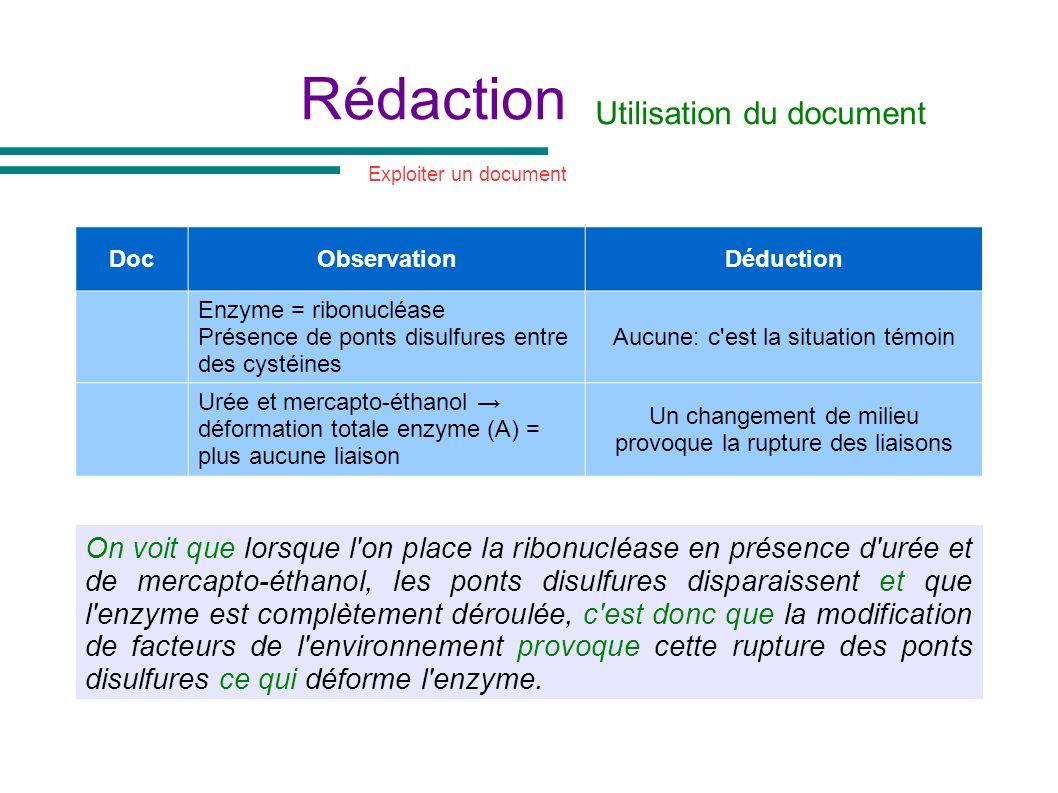 Rédaction Utilisation du document DocObservationDéduction Enzyme = ribonucléase Présence de ponts disulfures entre des cystéines Aucune: c'est la situ