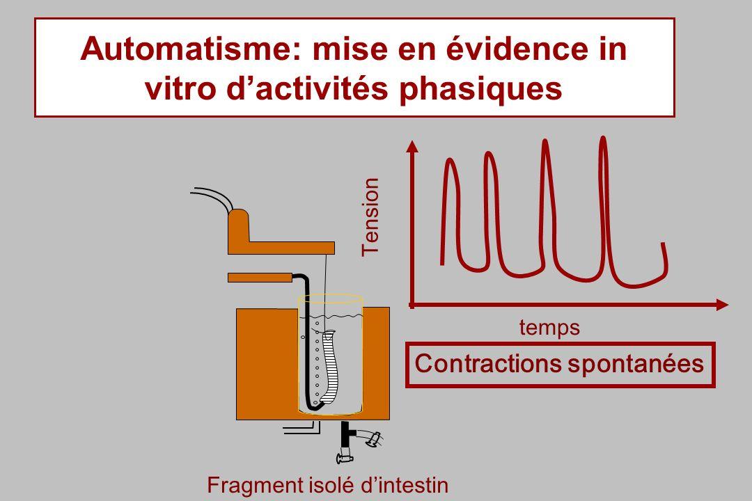 Automatisme: mise en évidence in vitro dactivités phasiques Fragment isolé dintestin Contractions spontanées Tension temps