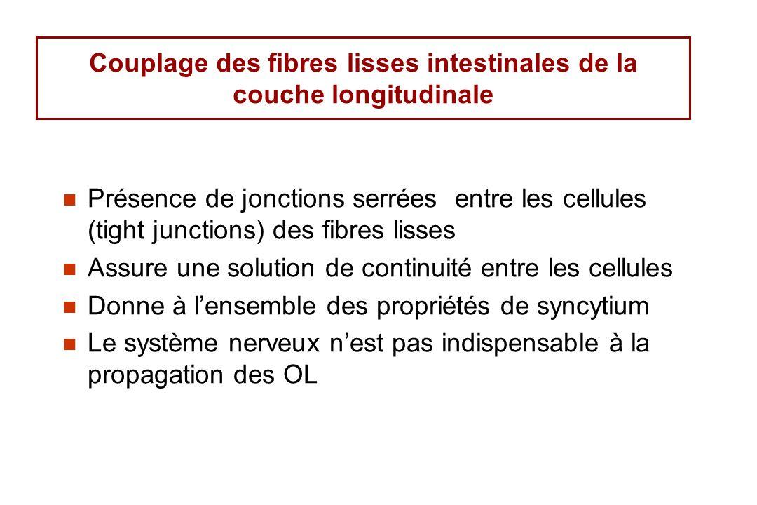 Couplage des fibres lisses intestinales de la couche longitudinale Présence de jonctions serrées entre les cellules (tight junctions) des fibres lisse