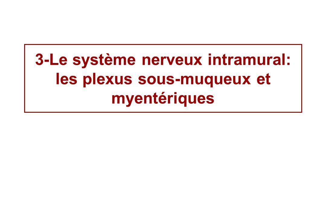 3-Le système nerveux intramural: les plexus sous-muqueux et myentériques