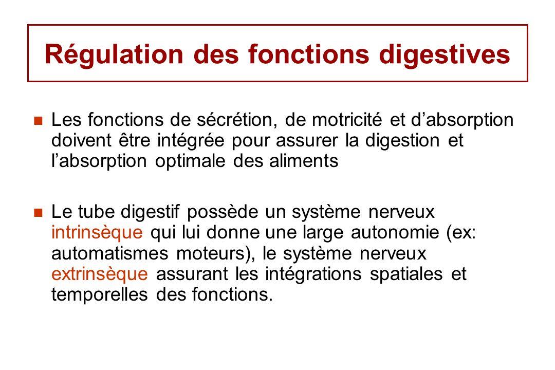Régulation des fonctions digestives Les fonctions de sécrétion, de motricité et dabsorption doivent être intégrée pour assurer la digestion et labsorp