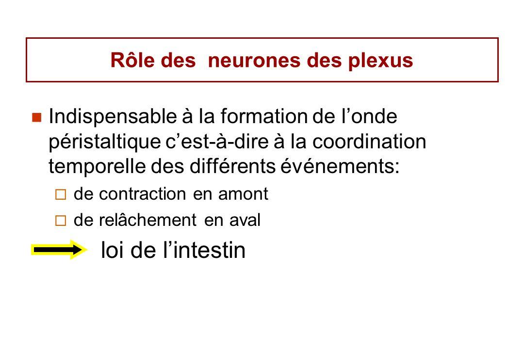 Rôle des neurones des plexus Indispensable à la formation de londe péristaltique cest-à-dire à la coordination temporelle des différents événements: de contraction en amont de relâchement en aval loi de lintestin