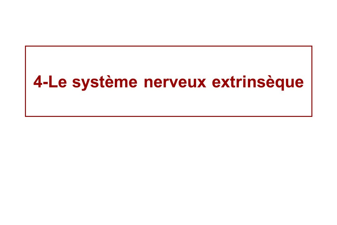 4-Le système nerveux extrinsèque