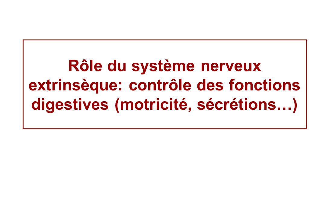 Rôle du système nerveux extrinsèque: contrôle des fonctions digestives (motricité, sécrétions…)