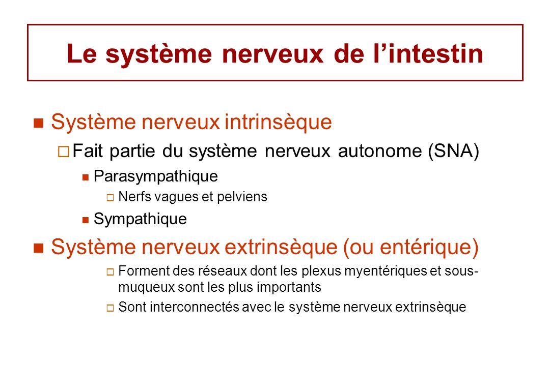 Le système nerveux de lintestin Système nerveux intrinsèque Fait partie du système nerveux autonome (SNA) Parasympathique Nerfs vagues et pelviens Sympathique Système nerveux extrinsèque (ou entérique) Forment des réseaux dont les plexus myentériques et sous- muqueux sont les plus importants Sont interconnectés avec le système nerveux extrinsèque