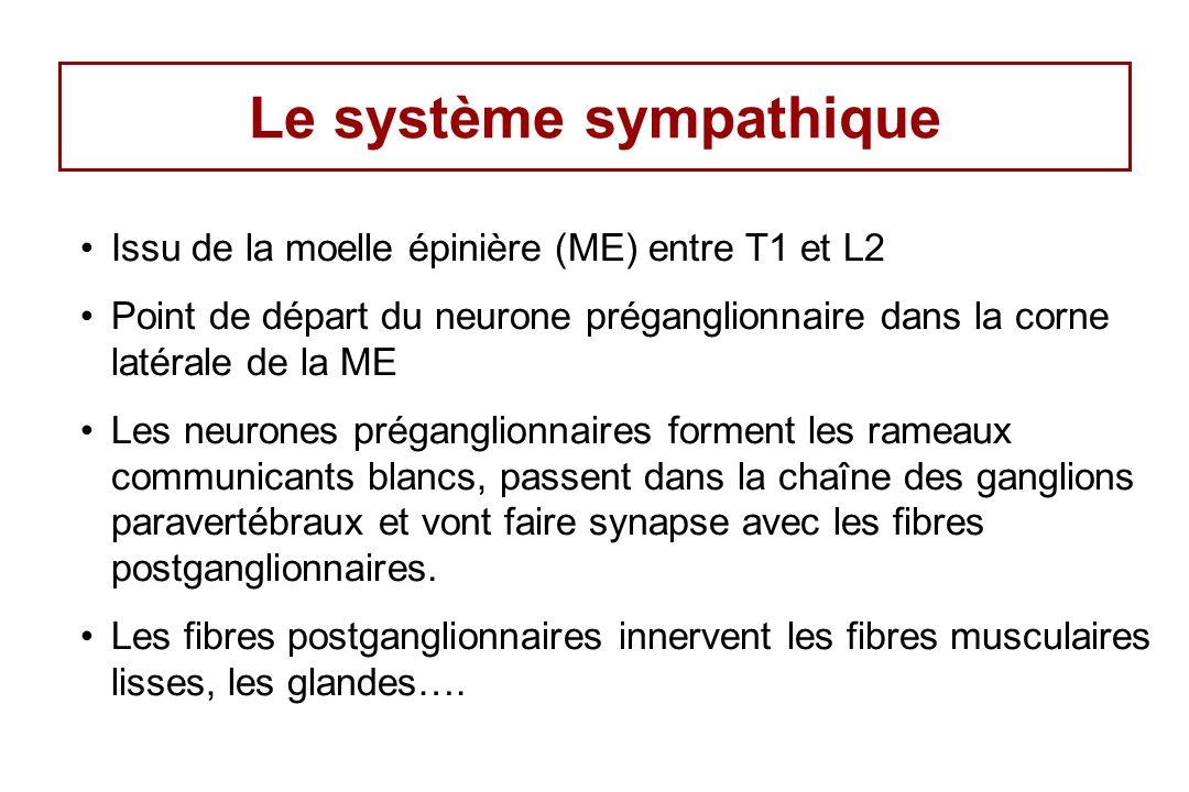 Le système sympathique Issu de la moelle épinière (ME) entre T1 et L2 Point de départ du neurone préganglionnaire dans la corne latérale de la ME Les neurones préganglionnaires forment les rameaux communicants blancs, passent dans la chaîne des ganglions paravertébraux et vont faire synapse avec les fibres postganglionnaires.