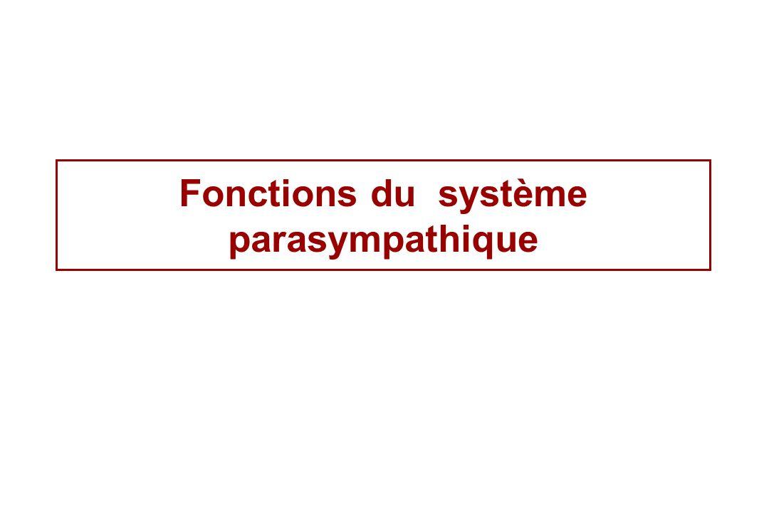 Fonctions du système parasympathique