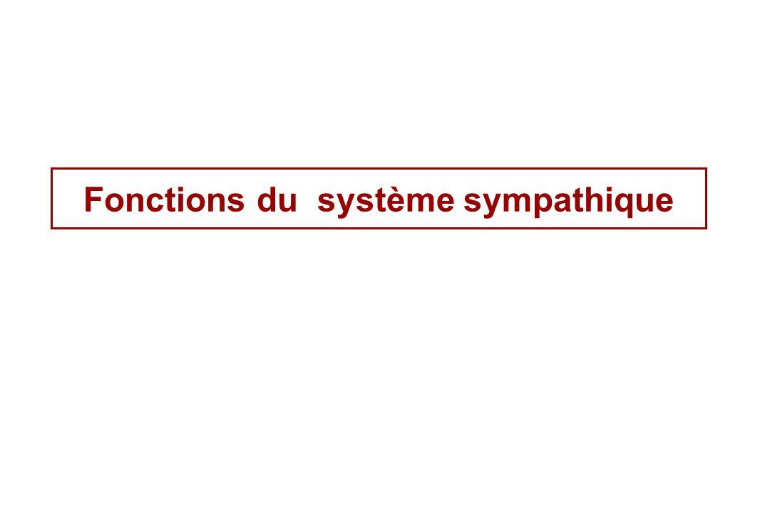 Fonctions du système sympathique