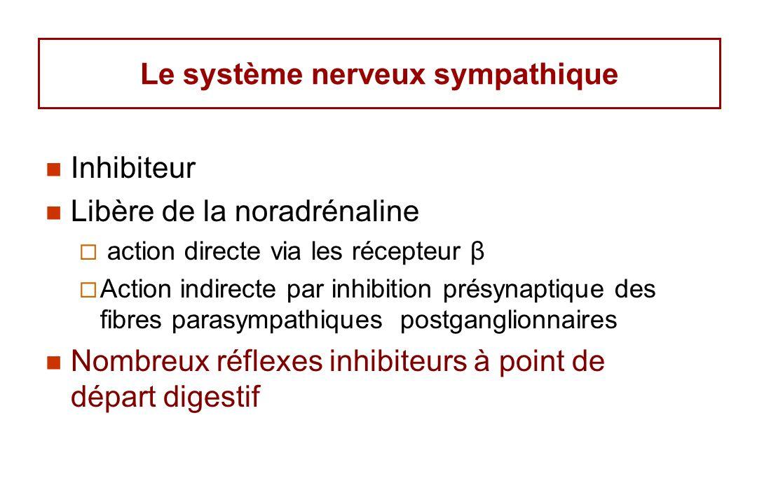Le système nerveux sympathique Inhibiteur Libère de la noradrénaline action directe via les récepteur β Action indirecte par inhibition présynaptique