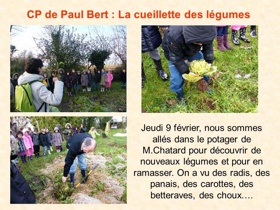 CP de Paul Bert : La cueillette des légumes Jeudi 9 février, nous sommes allés dans le potager de M.Chatard pour découvrir de nouveaux légumes et pour