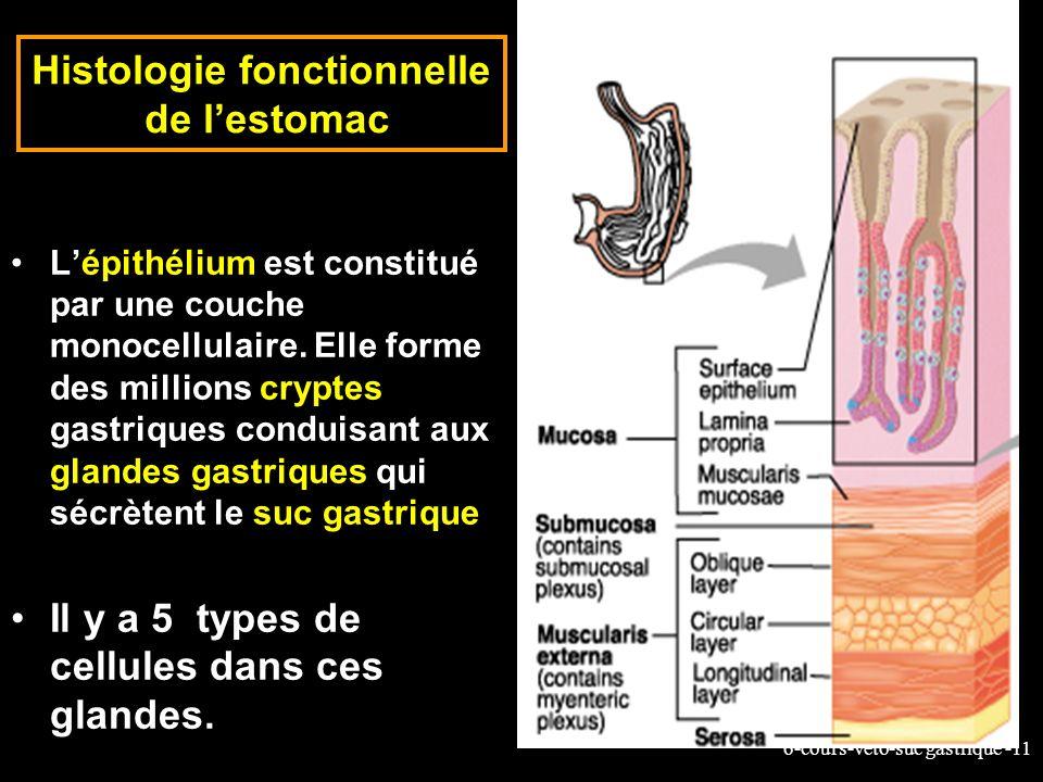 6-cours-veto-suc gastrique -11 Histologie fonctionnelle de lestomac Lépithélium est constitué par une couche monocellulaire. Elle forme des millions c