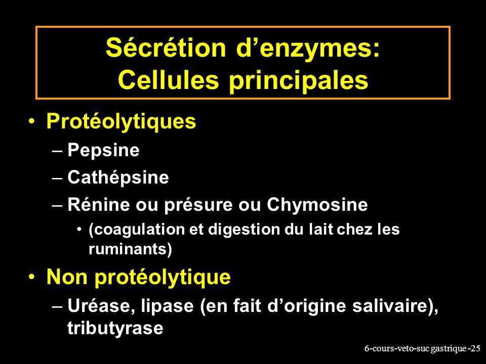 6-cours-veto-suc gastrique -25 Sécrétion denzymes: Cellules principales Protéolytiques –Pepsine –Cathépsine –Rénine ou présure ou Chymosine (coagulati