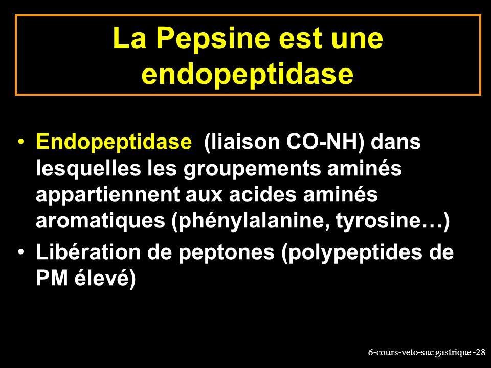 6-cours-veto-suc gastrique -28 La Pepsine est une endopeptidase Endopeptidase (liaison CO-NH) dans lesquelles les groupements aminés appartiennent aux