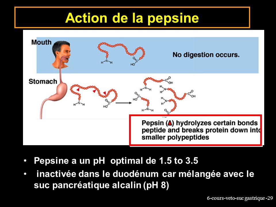 6-cours-veto-suc gastrique -29 Action de la pepsine Pepsine a un pH optimal de 1.5 to 3.5 inactivée dans le duodénum car mélangée avec le suc pancréat