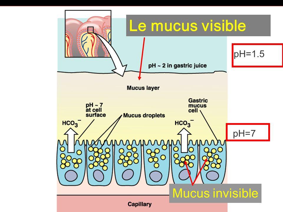 6-cours-veto-suc gastrique -32 Le mucus visible Mucus invisible pH=7 pH=1.5