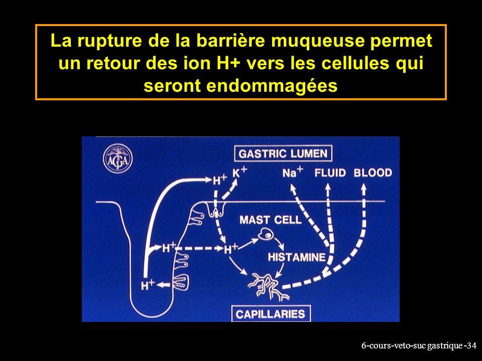 6-cours-veto-suc gastrique -34 La rupture de la barrière muqueuse permet un retour des ion H+ vers les cellules qui seront endommagées