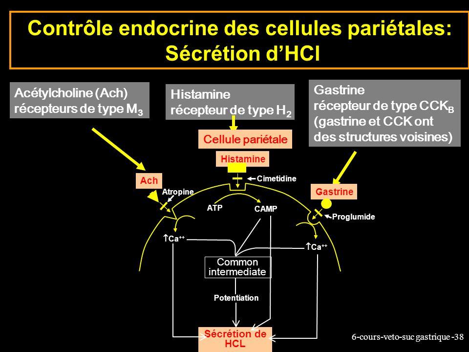 6-cours-veto-suc gastrique -38 Contrôle endocrine des cellules pariétales: Sécrétion dHCl Acétylcholine (Ach) récepteurs de type M 3 Histamine récepte