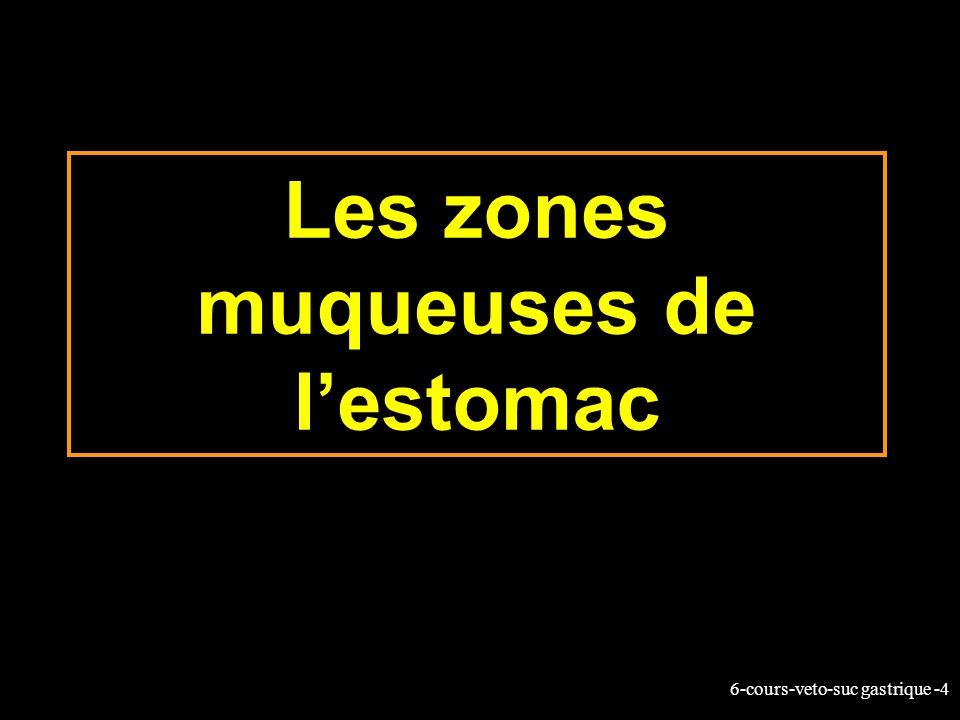 6-cours-veto-suc gastrique -4 Les zones muqueuses de lestomac