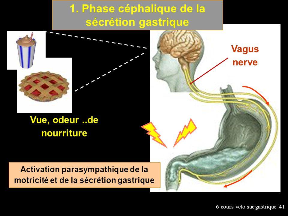 6-cours-veto-suc gastrique -41 1. Phase céphalique de la sécrétion gastrique Vue, odeur..de nourriture Activation parasympathique de la motricité et d