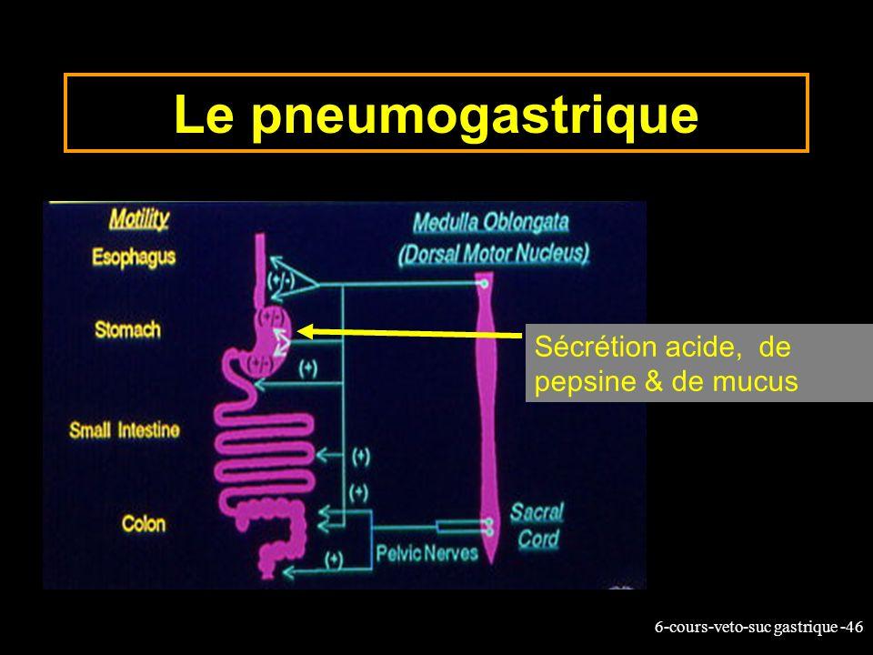 6-cours-veto-suc gastrique -46 Le pneumogastrique Sécrétion acide, de pepsine & de mucus