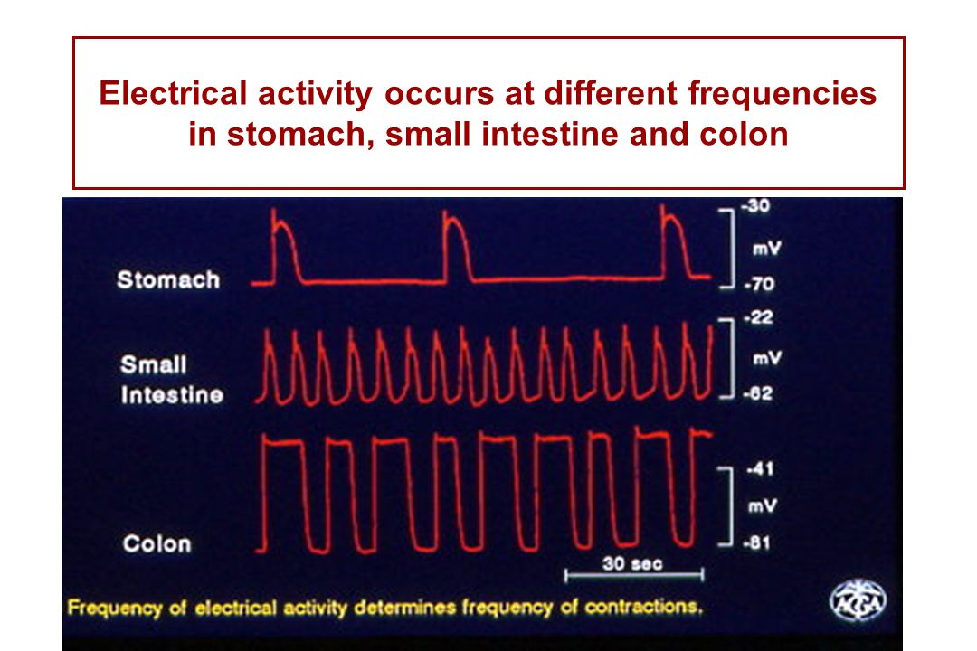 Electrical activity occurs at different frequencies in stomach, small intestine and colon