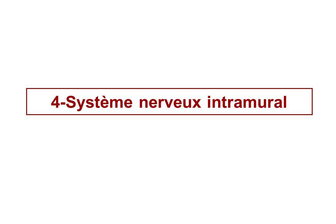 4-Système nerveux intramural