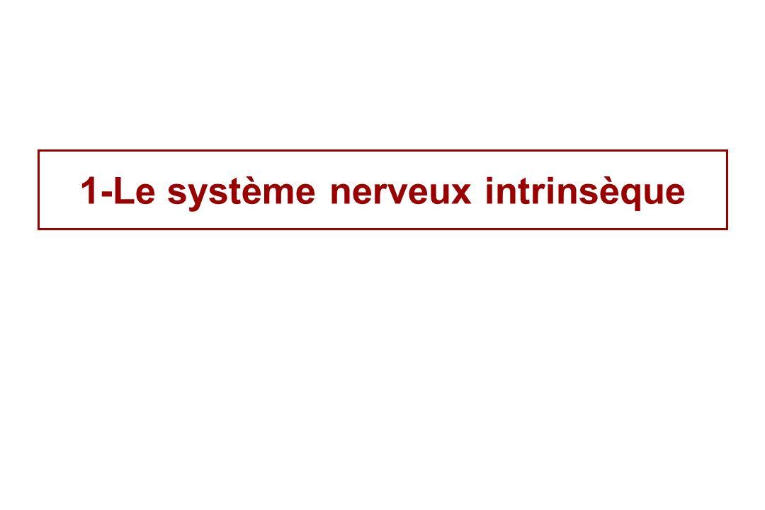 Contrôle du syst è me nerveux intrins è que par le syst è me nerveux extrins è que (parasympathique & sympathique )