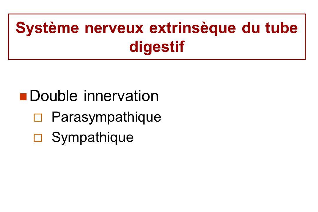 Système nerveux extrinsèque du tube digestif Double innervation Parasympathique Sympathique