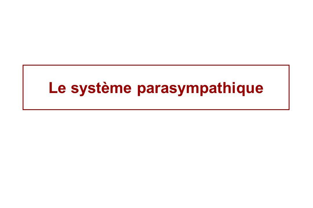 Le système parasympathique