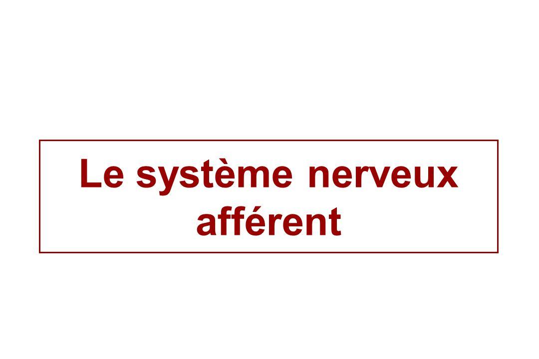 Le système nerveux afférent